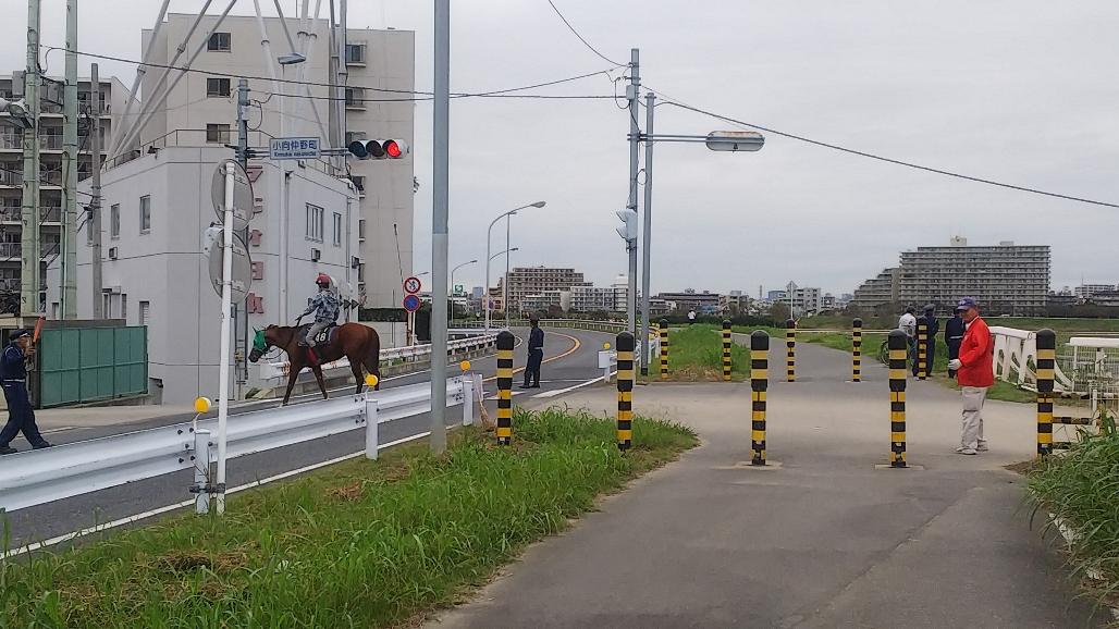 競走馬が横断します。